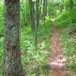 NC Hiking