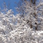 NC Snow